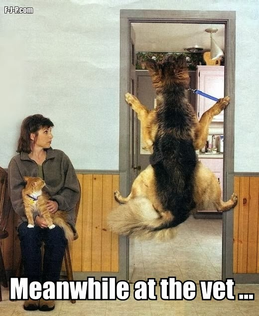 View joke - Meanwhile at the vet