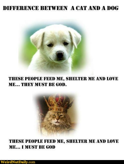 View joke - These people love me, feed me and shelter me. They must be God.