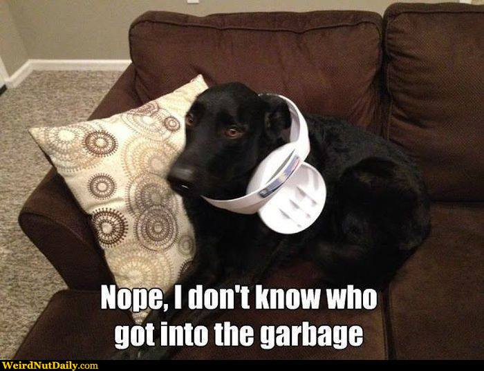 View joke - Are you sure you don't know who got into the garbage ? I kind of think it was you ...