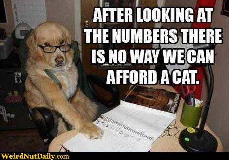 View joke - After looking at the numbers there is no way we can afford a cat