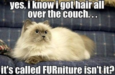 View joke - Yes, I know, my hair is all over the couch... It's called FURniture, isn't it ?
